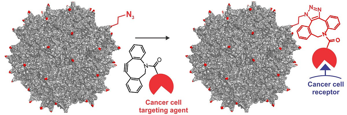 Researchers incorporated engineered amino acids into the colored sites shown on an adeno-associated virus to build a cancer-cell targeting gene therapy.