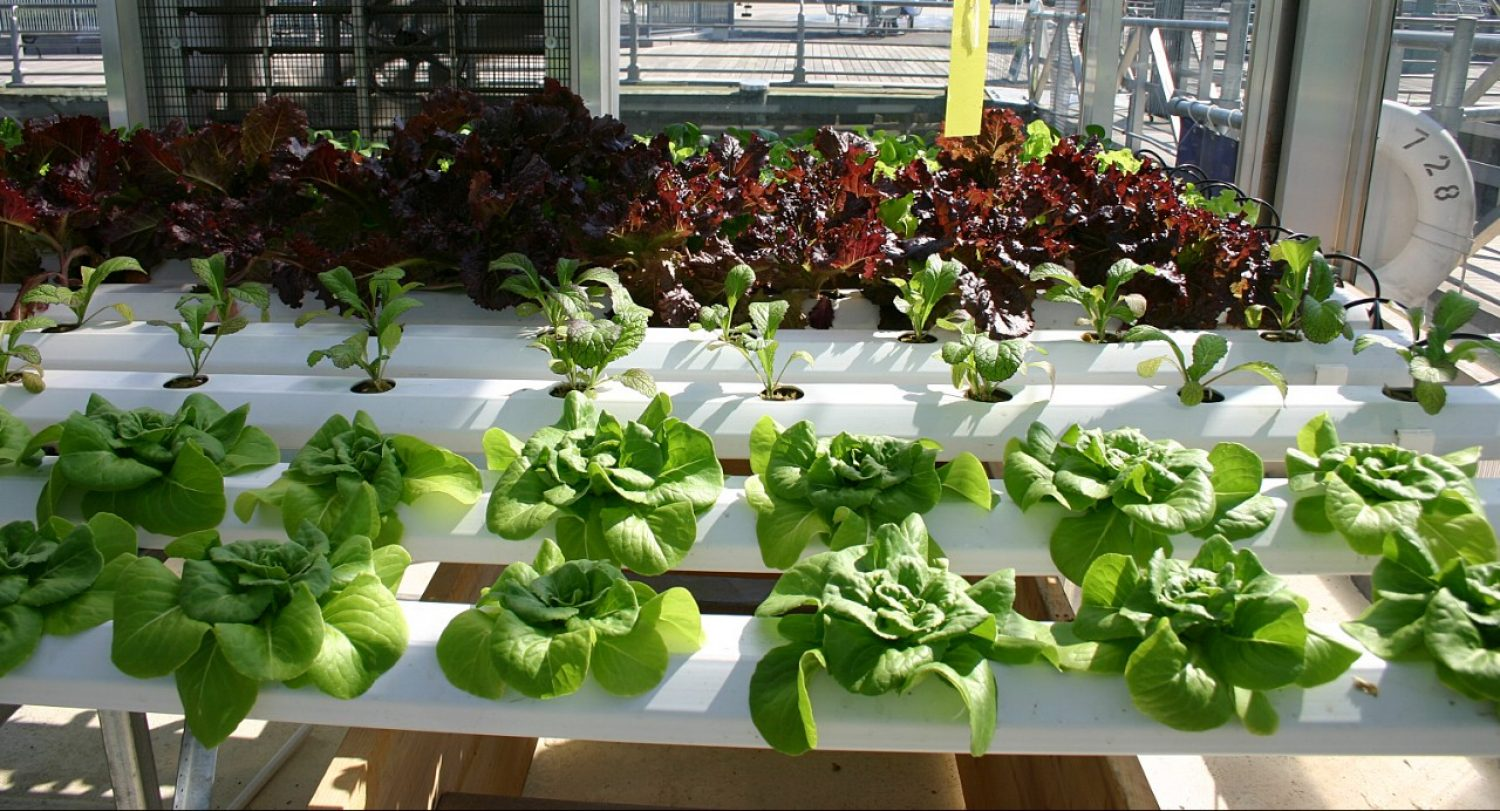 Hydroponics greenhouse (Ryan Somma | CC BY-SA 2.0)