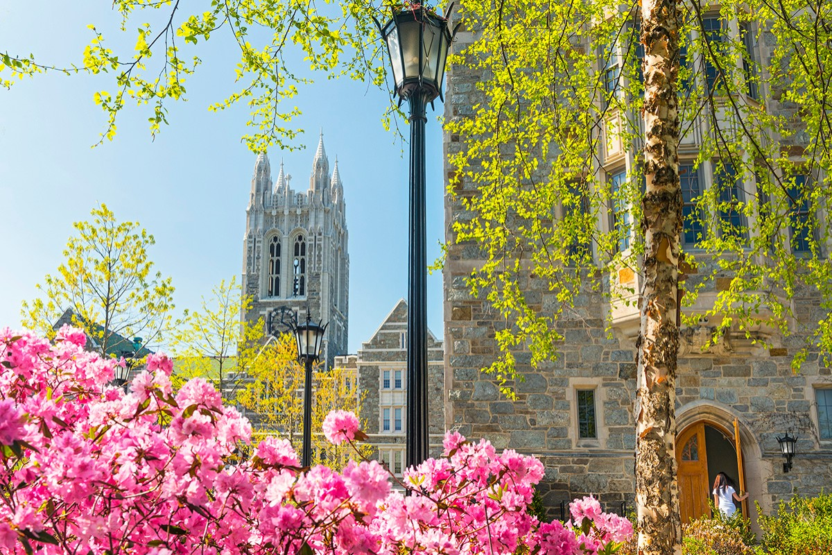 A view of the rose garden with Gasson Tower in the background.
