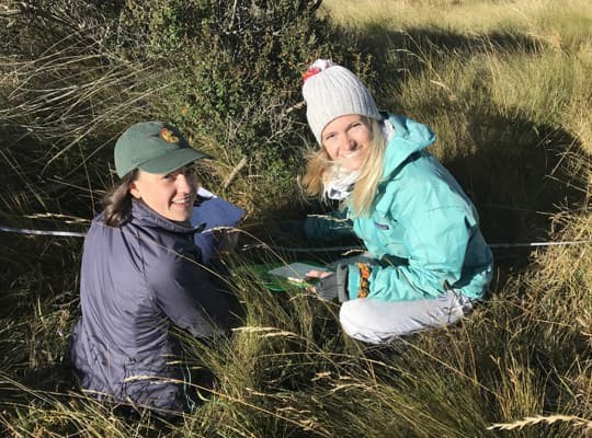 Environmental Studies students study plant diversity in the paramo in summer abroad course EESC1222 Conservation Ecology in Ecuador