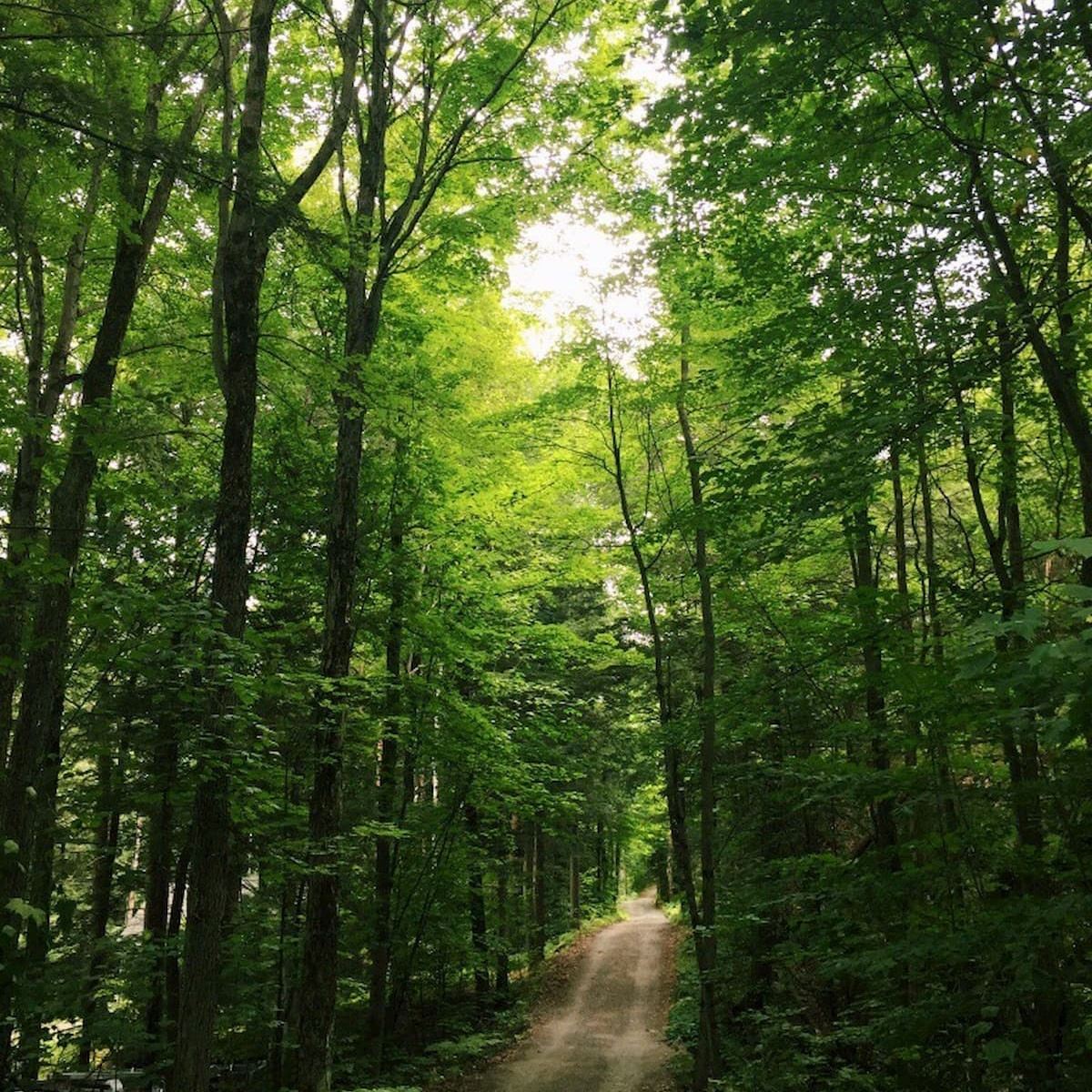 Claire Wortsman '20 captures a beautiful sunny day during a walk in Muskoka, Ontario.