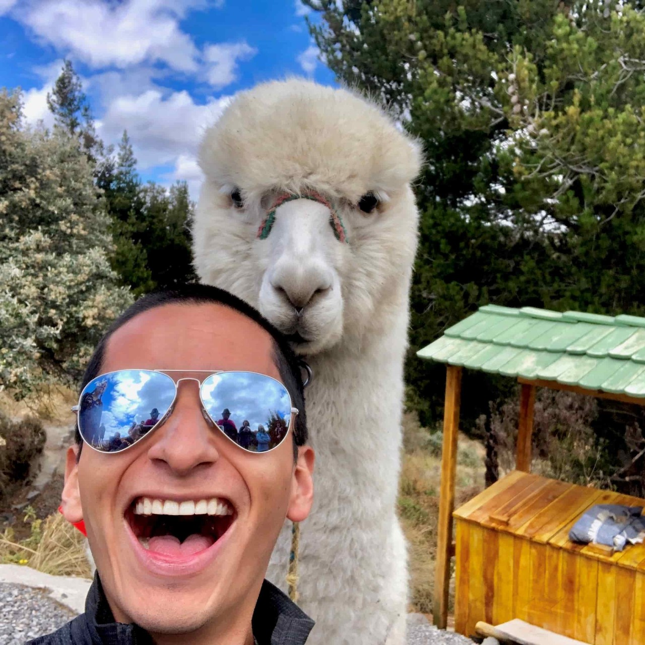 John Gehman '21 poses with an Alpaca while hiking the Quilotoa Volcano and Lagoon just south of Quito, Ecuador in September 2019.