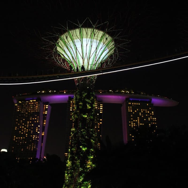 William Kim '20 sent this photo of the SuperTree Grove in Singapore, in front of the famous Marina Bay Sands Hotel.