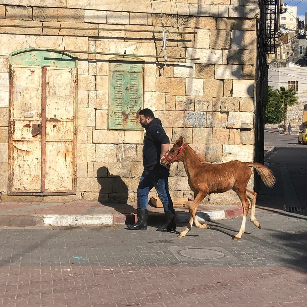 A man walks a foal through the cobblestone streets of Hebron, Palestine, in this January 2019 photo from Prof. Erik Owens