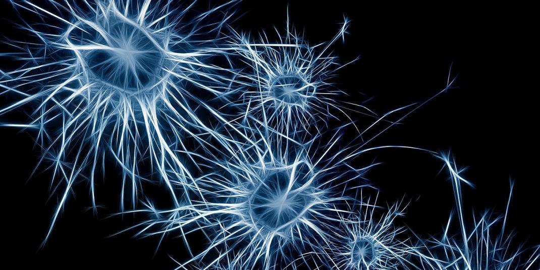 neurons (by Gerd-Altmann, CCO)