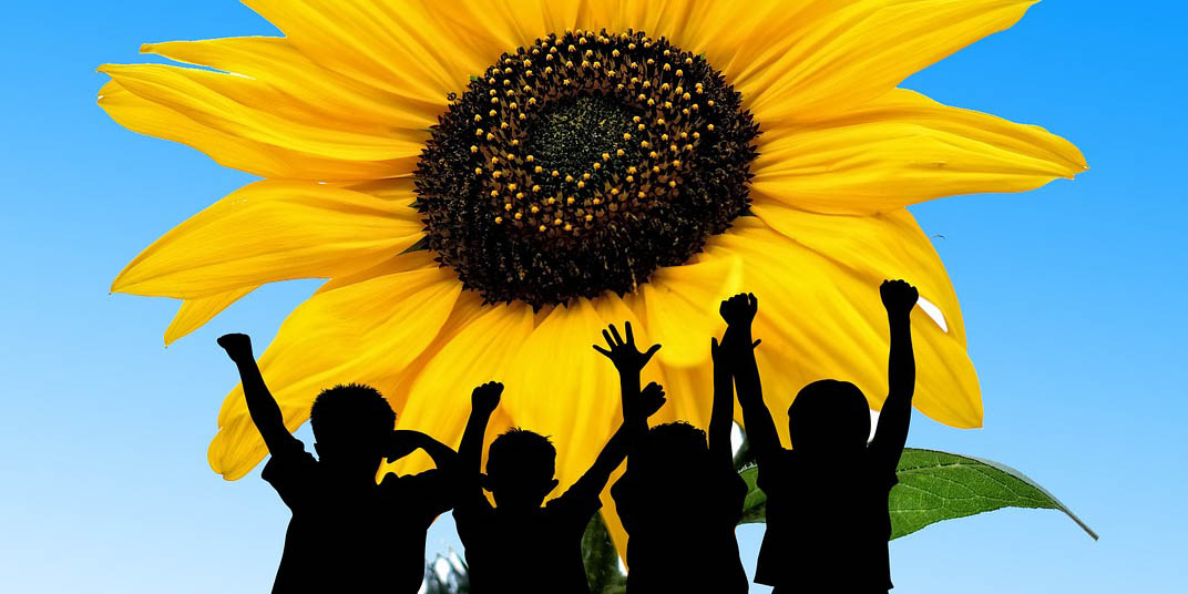Children silhouettes against sunflower