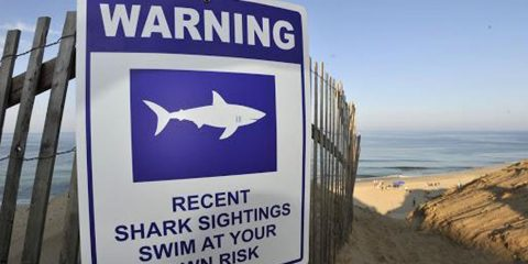 Shark sightings warning sign