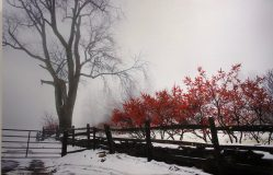 """Winter Berry in the Fog"" by Ken Porter, Information Technology"